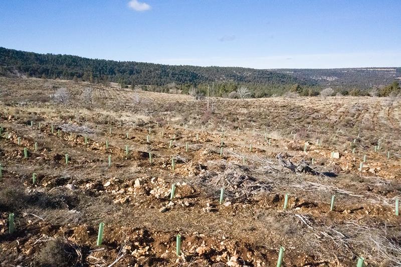 #BosqueSpringfield árboles Galicia noticias retail