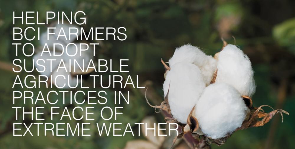 Tendam Better Cotton Initiative producción algodón noticias retail